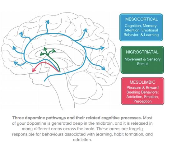 Dopamine image